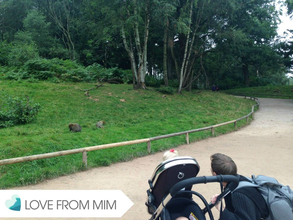 A Trip to Trentham Monkey Forest! - lovefrommim.com