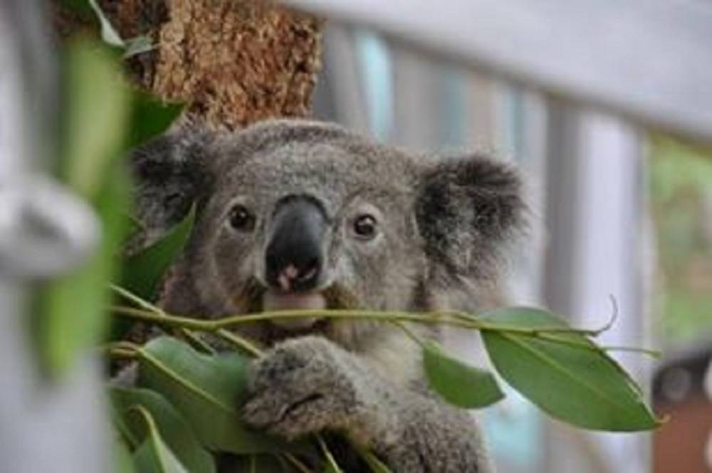 Weekly Round Up - Week 4 - lovefrommim.com Emigrating to Australia from the UK
